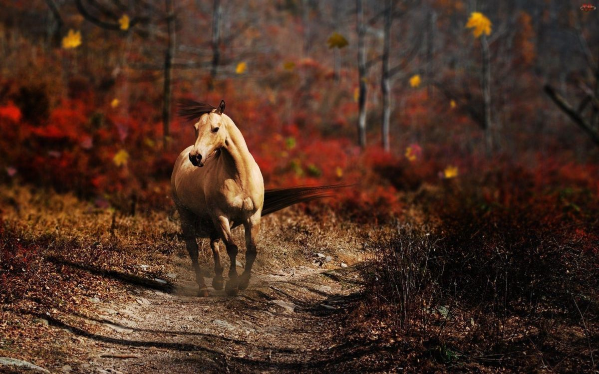 Running Horse Wallpaper 1920×1200 #853 Wallpaper computer | best …