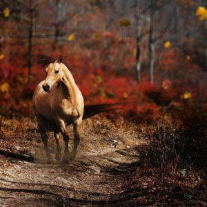 download Running Horse Wallpaper 1920×1200 #853 Wallpaper computer | best …