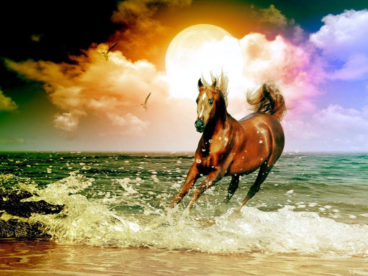 Arabian Horse Wallpapers | Hd Wallpapers