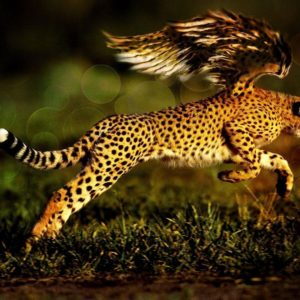 download 24 Jaguar Wallpapers Download
