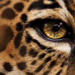 download 24 Jaguar Wallpapers Download