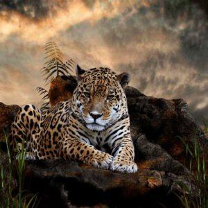 download Jaguar HD Wallpapers