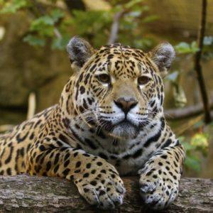 download YouWall – Beautiful Jaguar Wallpaper – wallpaper,wallpapers,free …