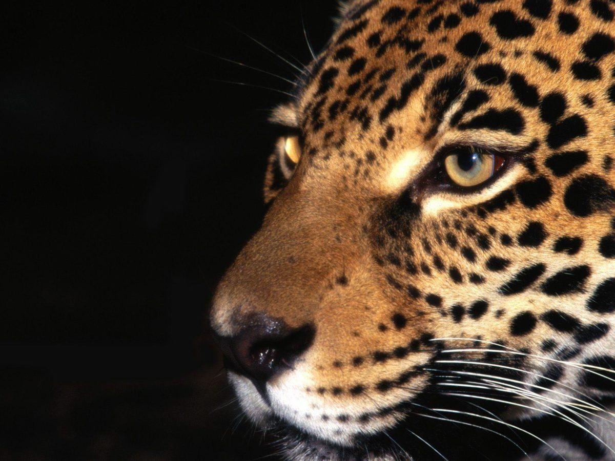 HD Jaguar Wallpaper #6839771
