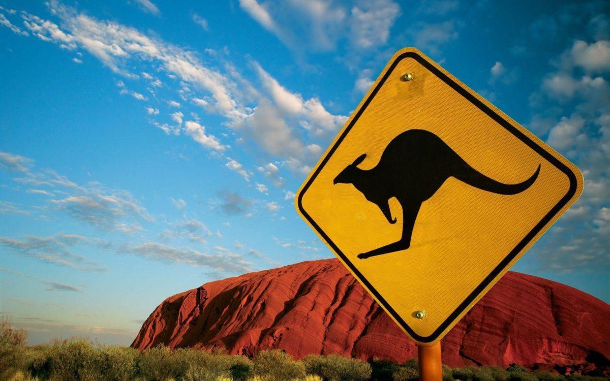 Kangaroo Wallpapers – Full HD wallpaper search