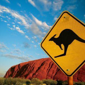 download Kangaroo Wallpapers – Full HD wallpaper search