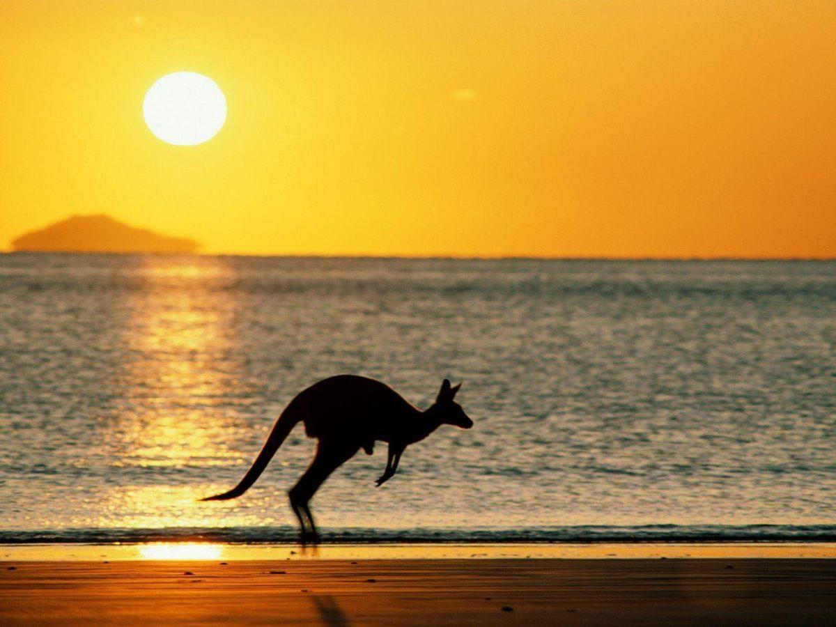 Download Kangaroo Wallpaper 1600×1200 | Full HD Wallpapers