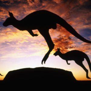 download kangaroo HD Wallpaper Free Download | HD Free Wallpapers Download