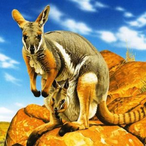 download Kangaroo Pics HD (6) – Zem Wallpaper Is The Best Place Where You …