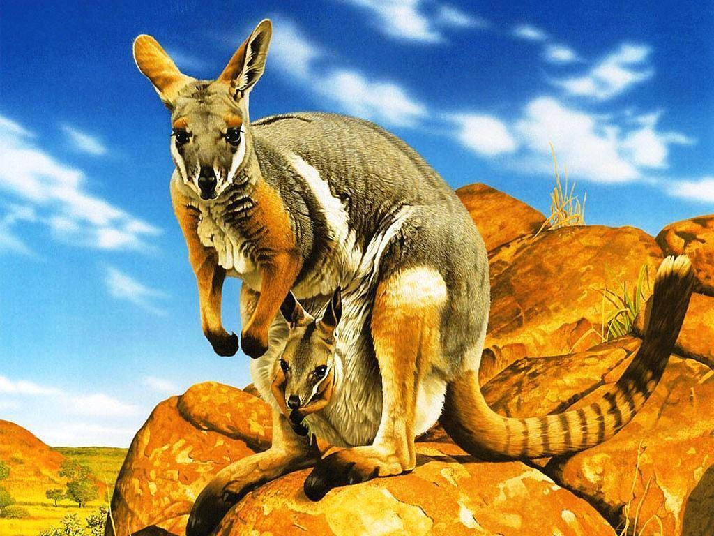 Kangaroo Pics HD (6) – Zem Wallpaper Is The Best Place Where You …