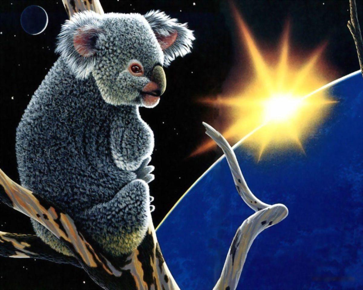 Koala wallpaper Wallpapers – HD Wallpapers 3134