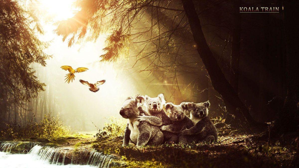 Free Wallpapers – Koalas In Forest 1600×900 wallpaper
