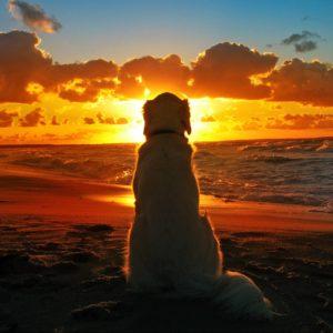 download Labrador Retriever At Seashore – Animals Wallpapers