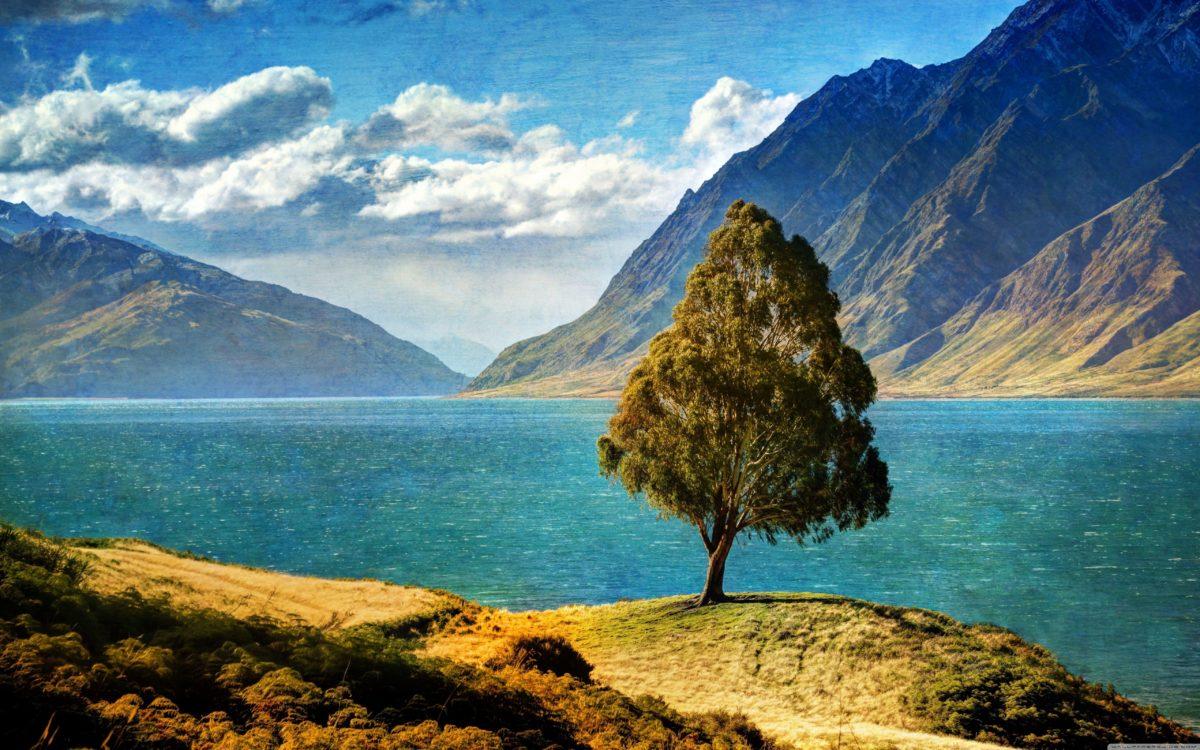 Tree By The Lake HD desktop wallpaper : High Definition …