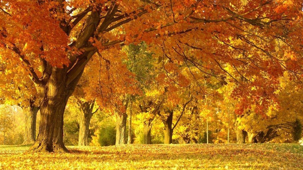 Laptop Backgrounds Free 31 Widescreen HD Background And Wallpaper …