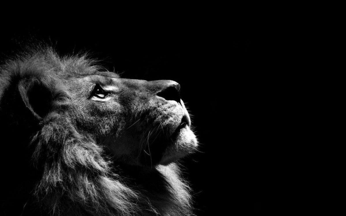 Fonds d'écran Lion : tous les wallpapers Lion