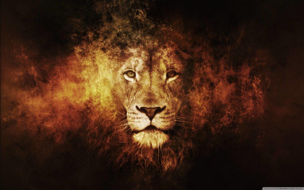 Lion Wallpaper – Full HD wallpaper search