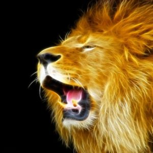 download Download Lion Wallpapers – HD Wallpapers Inn