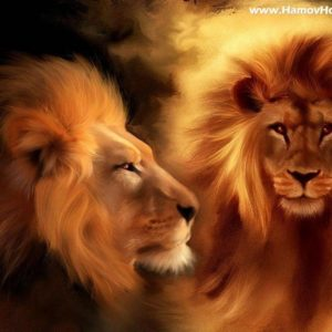 download Wallpapers For > Roaring Male Lion Wallpaper
