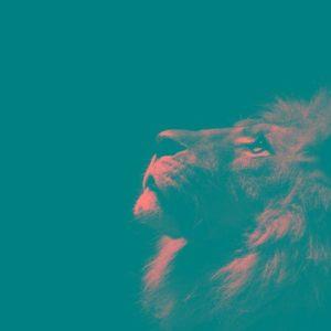 download Black Lion Wallpapers