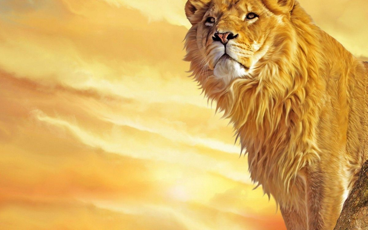 Mac Lion Wallpapers – Full HD wallpaper search – page 8