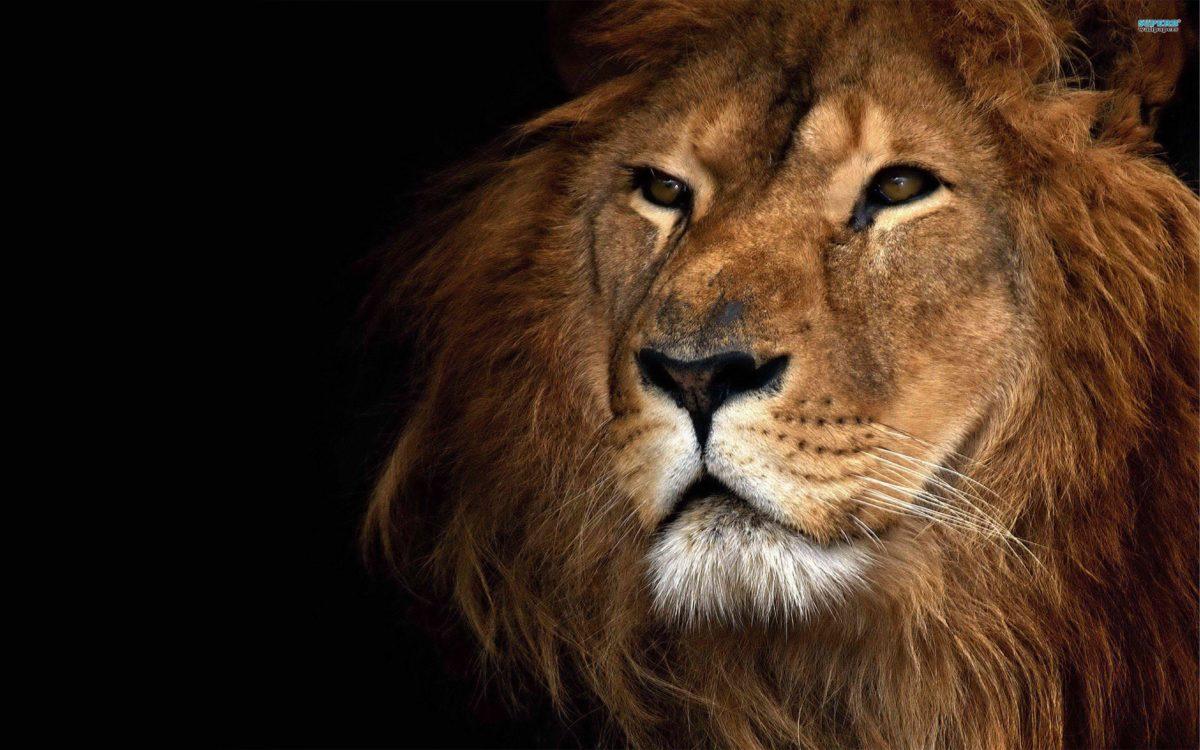 Lion Wallpaper Download Free · Air Force Wallpapers | Best Desktop …