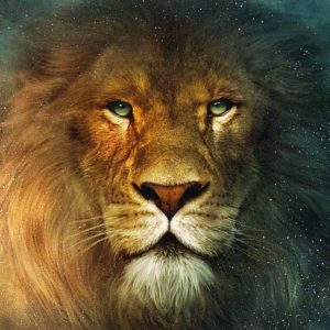download lion background wallpapers hd | Wallput.com