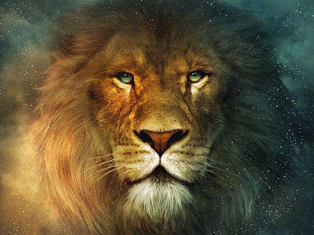 lion background wallpapers hd | Wallput.com
