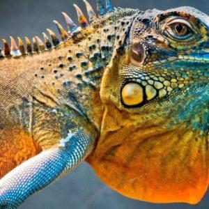 download 269 Lizard Wallpapers   Lizard Backgrounds Page 3