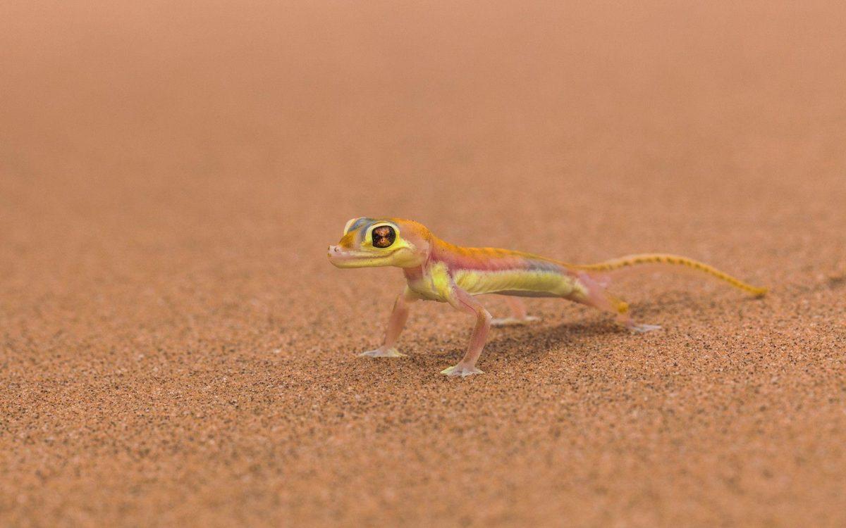 269 Lizard Wallpapers | Lizard Backgrounds