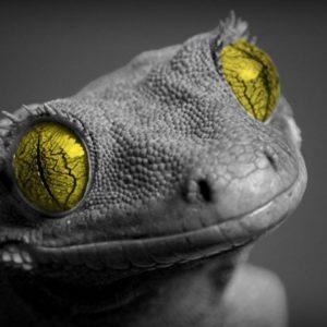 download Lizard Desktop Wallpapers – HD Wallpapers Inn