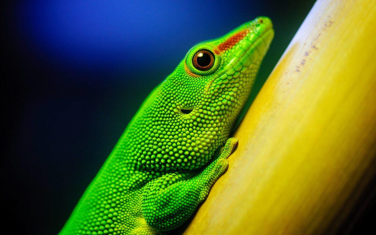 269 Lizard Wallpapers | Lizard Backgrounds Page 3