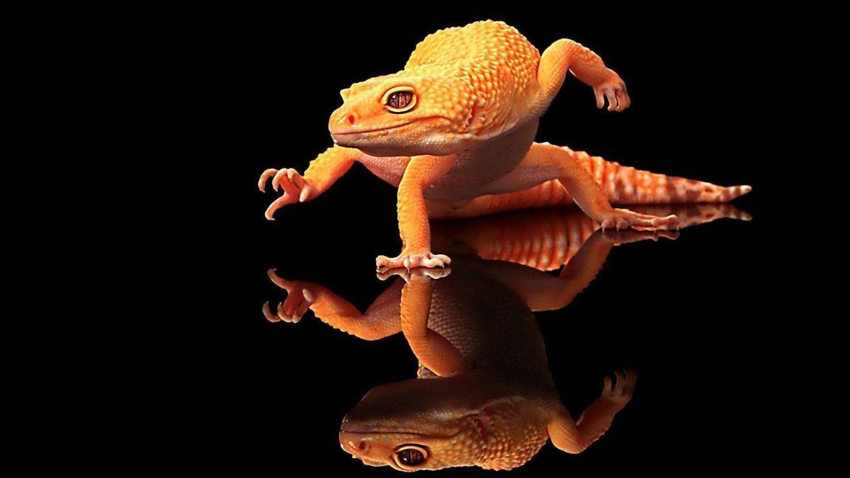 Cool Lizard Wallpaper | Download HD Wallpapers