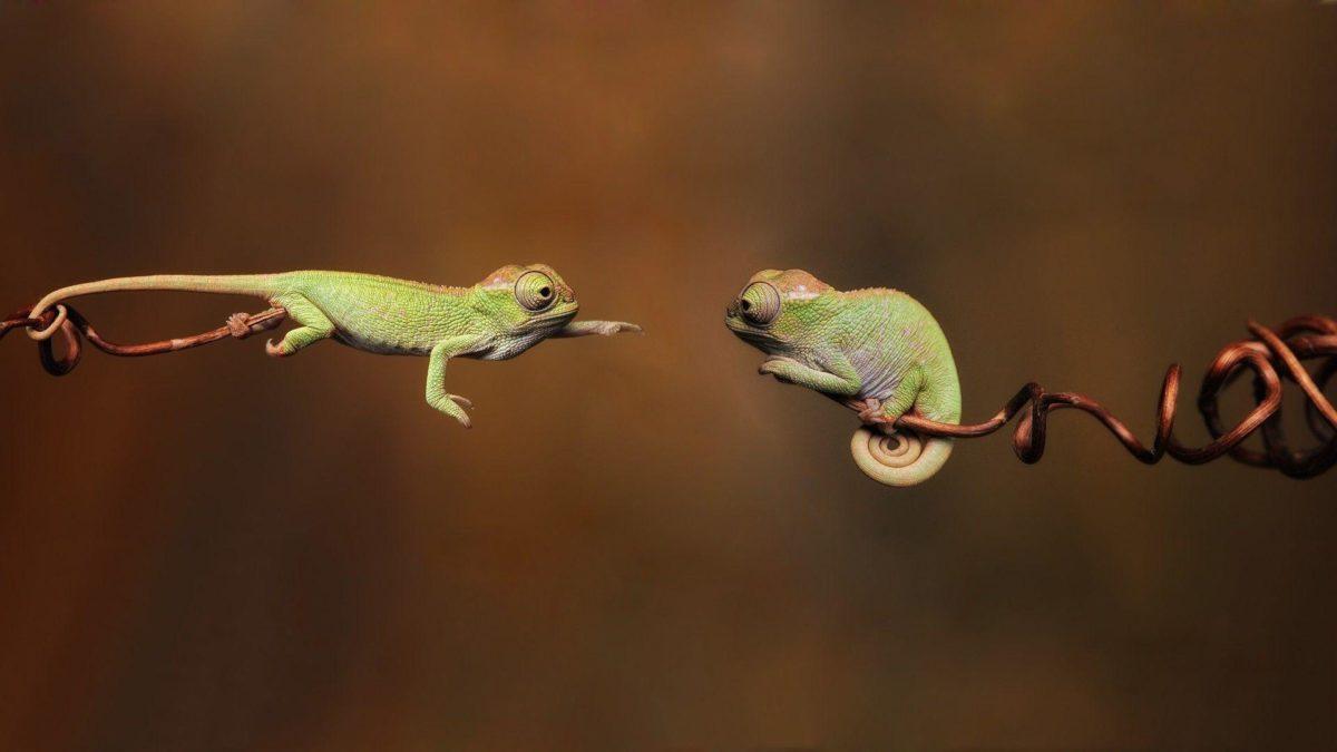 Flying lizard hd wallpaper | HD Wallpapers | Desktop Wallpapers