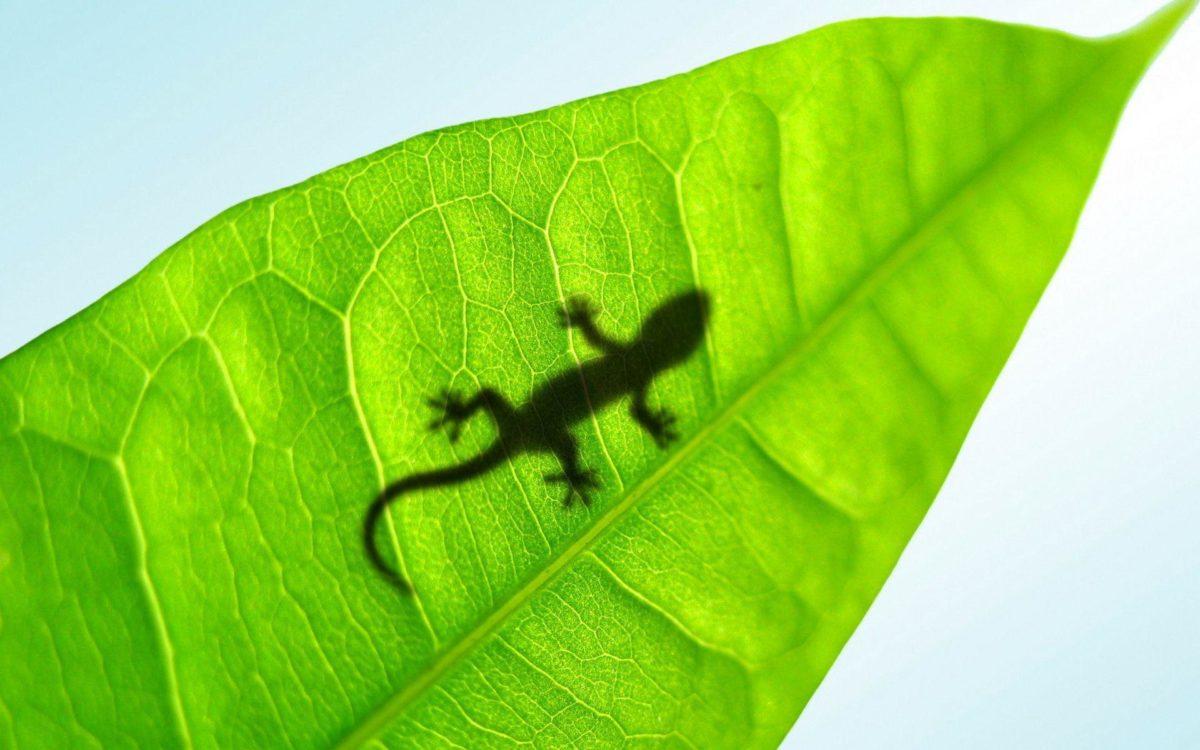 Lizard wallpaper – 711558