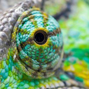 download Lizard Computer Wallpapers, Desktop Backgrounds 2560×1600 Id: 321647