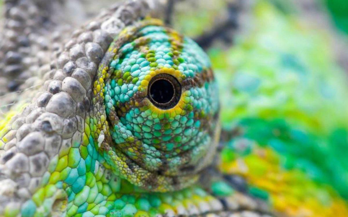 Colorful Lizard Eyes Wallpaper | Paravu.com | HD Wallpaper and …
