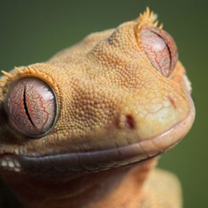 download Lizard HD Wallpapers