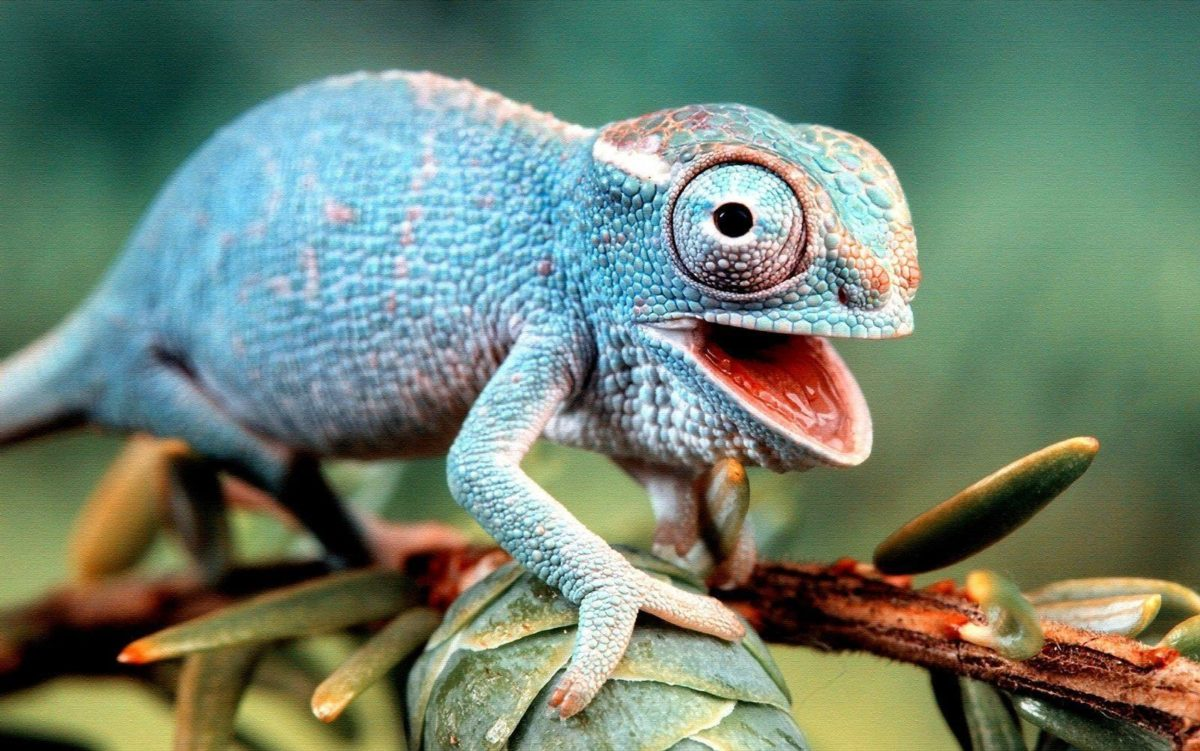 Download Colorful Lizard Wallpaper 21416 1600×1001 px High …