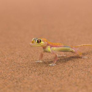 download Download Lizard Wallpaper 21411 1920×1200 px High Resolution …