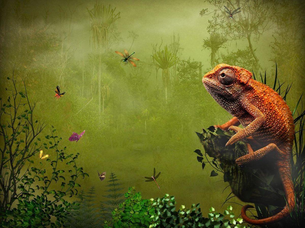 270 Lizard Wallpapers | Lizard Backgrounds Page 7