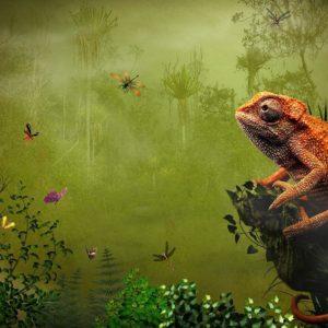 download 270 Lizard Wallpapers | Lizard Backgrounds Page 7