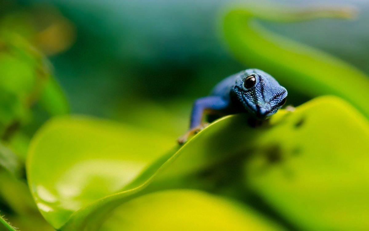 Colorful Blue Lizard Wallpaper | Paravu.com | HD Wallpaper and …