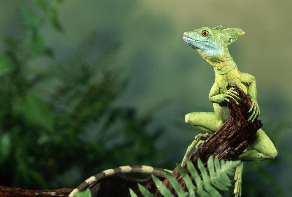 Adorable Lizard Wallpaper | Paravu.com | HD Wallpaper and Download …