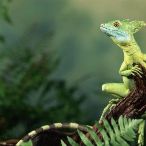 download Adorable Lizard Wallpaper | Paravu.com | HD Wallpaper and Download …