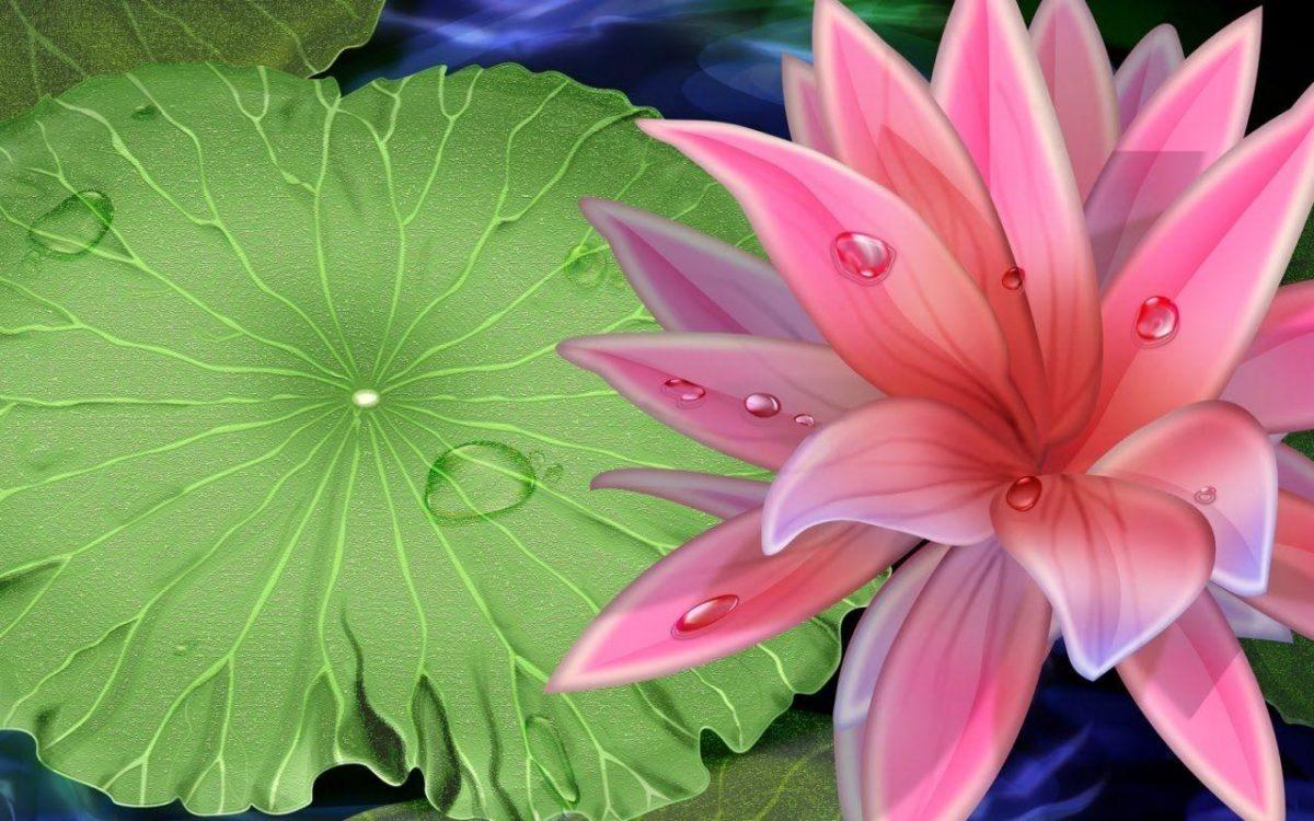Pink Beauty Lotus Flower Desktop Wallpaper Download Free – Free …