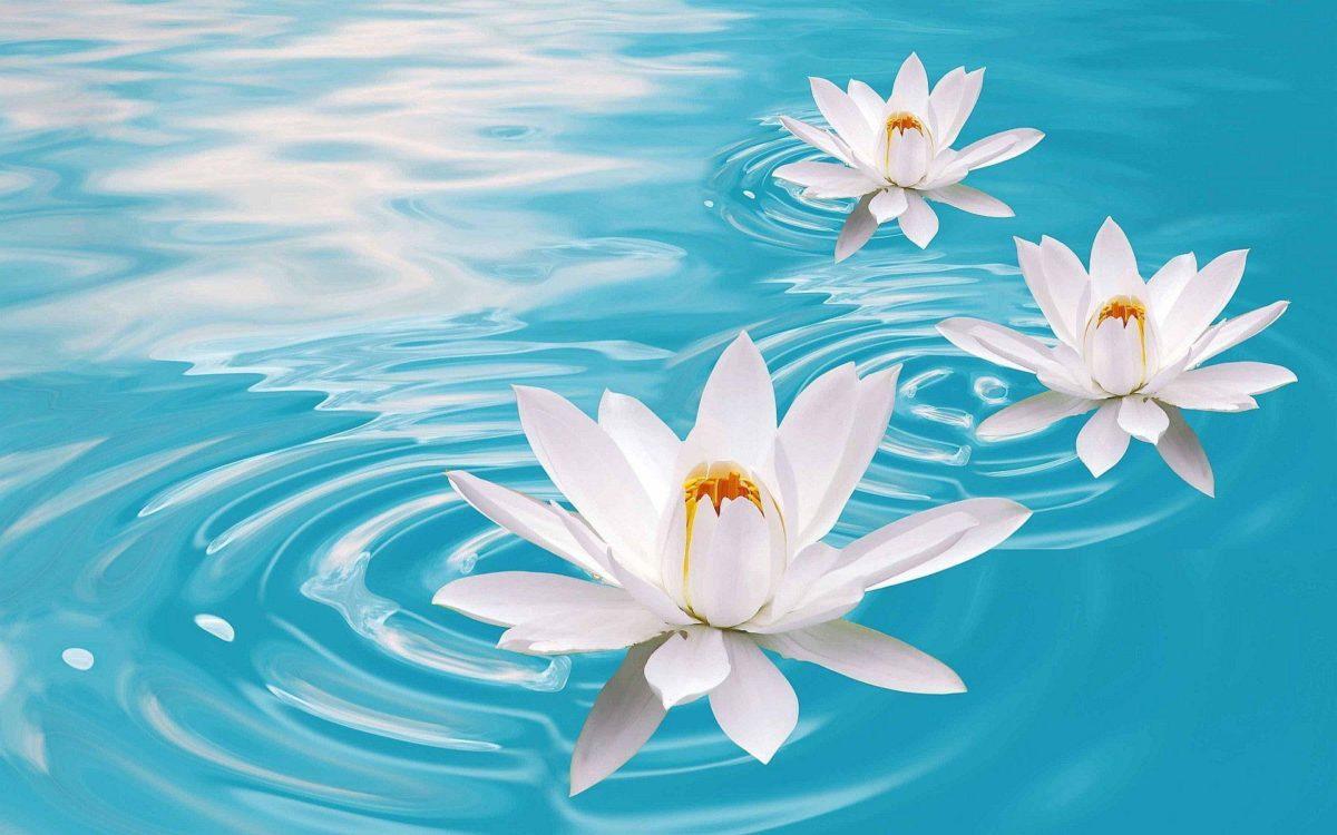 Lotus Flowers Hd Wallpapers | Wallpapers Top 10