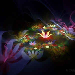 download Fantastic lotus flower Wallpapers – HD Wallpapers 1284