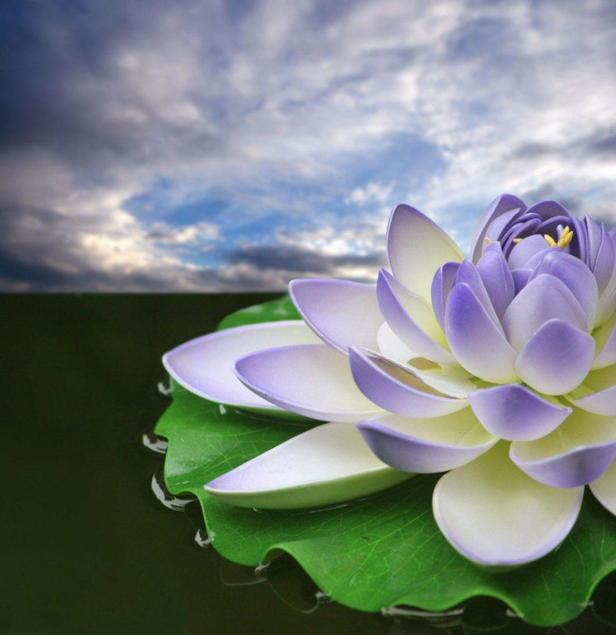 Lotus 31033 – Flower Wallpapers – Flowers