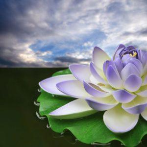 download Lotus 31033 – Flower Wallpapers – Flowers